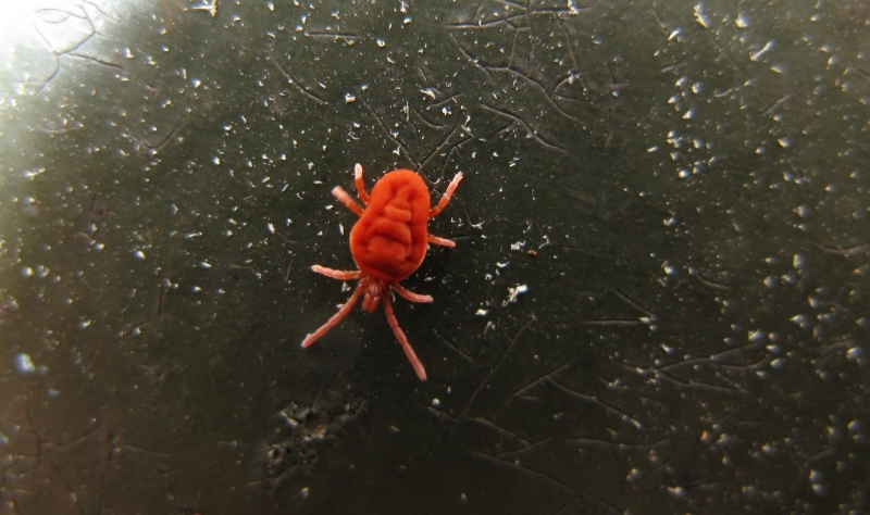 Маленькие оранжевые пауки
